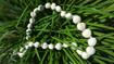 Nature's Natural White kukui nut lei - 1 per order