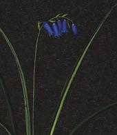 Black Hyacinth G. Frame Authentic Models