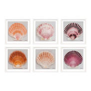 "Trowbridge Prints ""Shell"" by Ben Wood - Set of 6"