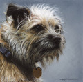 Contemplation - Border Terrier by Marc Mitchard