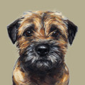 Border Terrier limited edition print by Justine Osborne