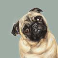 Pug Study I Limited edition print by Justine Osborne