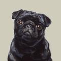 Pug Study II Limited edition print by Justine Osborne