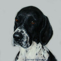 English Pointer A Limited edition print by Justine Osborne