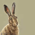 &#039;Glimpse&#039; Hare Study - Limited edition print by Justine Osborne