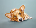   Corgi Study - Original Oil by Justine Osborne