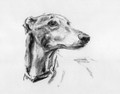 Greyhound Study A Charcoal Drawing by Justine Osborne