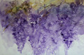 Wisteria Whispers a Floral Study in Watercolour by Jean Haines