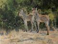 Zambian Twins - A Zebra Study by Paul Apps