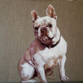 Original Oil - French Bulldog Study by Catherine Ingleby