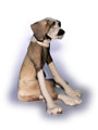 Sitting Patchy Dog by Virginia Dowe Edwards