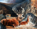 Stags at Balmoral by David McEwen