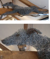 Greyhound Wire Wall Hanging Sculpture by Paula Joule Blake