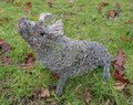 Seated Pig Wire Sculpture by Paula Joule Blake