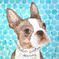 Beautiful Boston Terrier by Kathy Webster
