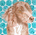 Spaniel by Kathy Webster