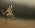 Goldfinch by Marc Mitchard