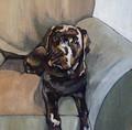 ORIGINAL Black Labrador on Armchair by Jenni Cator