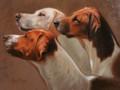Three Hounds Portrait Sample by Hazel Morgan
