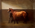 Colt in Stable by Hazel Morgan