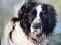 Sweep an Oil Painting by Kathryn Dalziel