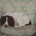 Springer Spaniel Lounging in a Favourite Chair. A Portrait in Oils by Jay Crowther