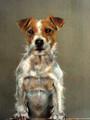 Jack Russell Study by Paula Vize