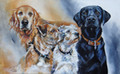 The Family Dogs A Canine Portrait by Paula Vize
