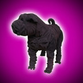 Suede Leather Shar Pei Sofa Dog Sculpture by Dominic Gubb