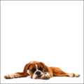 Boxer Photograph by Chris Pethick Pet Portrait Photographer