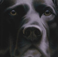 Larger Than Life Black Lab I by Nigel Hemming