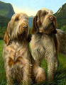 Latin Spirit Spinone Painting by Nigel Hemming