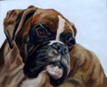 Louis Boxer Dog Study by Thuline de Cock