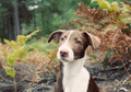 Pet Portrait Photography Sample of a Whippet Collie Cross by Eloise Leyden