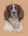 Portraiture Sample of Jasper by Hannah Steedman