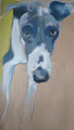 The Whippet an Oil Painting by Sally Muir