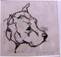 Dogo Argentino by Ian Mason