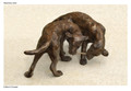 Bronze Labrador Sculpture by Rosemary Cook