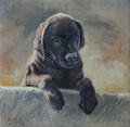 Labrador Puppy by Paul Apps