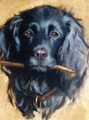Working Cocker Spaniel Painting by Hazel Morgan