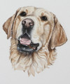 Golden Retriever Painting by Coral Hutchings