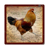 Vintage Rooster Tin Sign 12 x 12 Inches