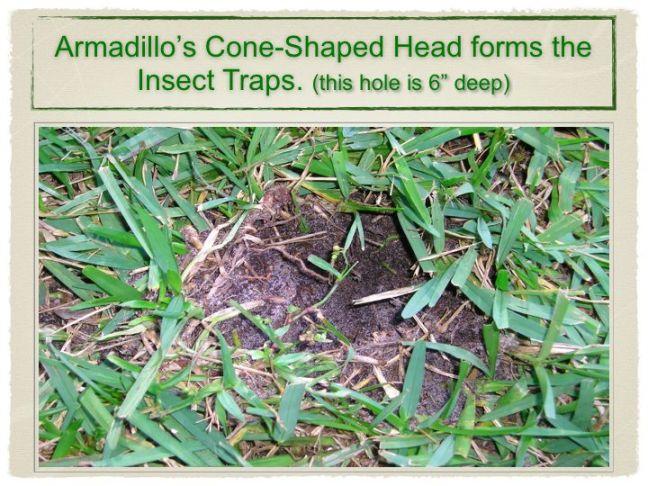 armadillo-pres-slides.006r.jpg
