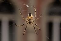 spiderfree1.jpg