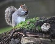 squirrelfree.jpg