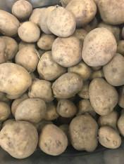 Sabago Seed Potato Per Kg