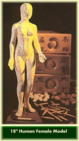 Acupuncture Female Model 18