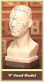 Head Acupuncture Model 9""