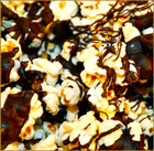 Chocolate Drizzled Popcorn - All Natural Popcorn