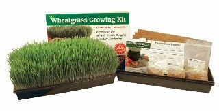 Handy Pantry Wheatgrass Growing Kit  WGK-DE